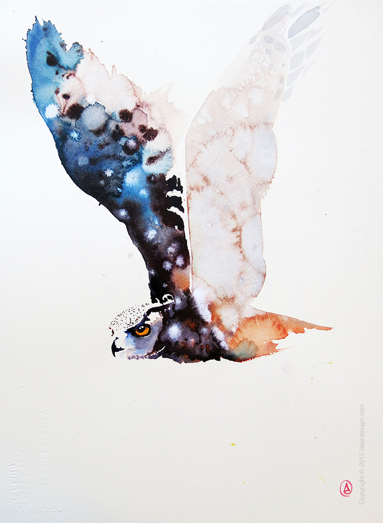 daniel luther watercolor illustrations